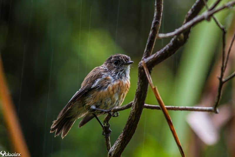 Où sont les oiseaux quand il pleut ?
